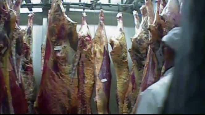 Carne de la vitele bolnave din Polonia a ajuns și în România! Anunțul autorităților. VIDEO