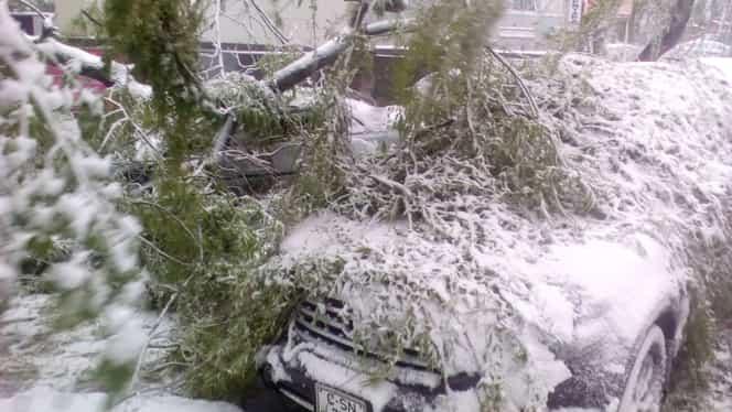 O femeie a fost grav rănită, după ce un copac înghețat i-a căzut în cap