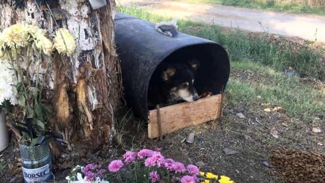 Un câine din Iași refuză să plece din locul în care a murit un tânăr. Povestea animalului