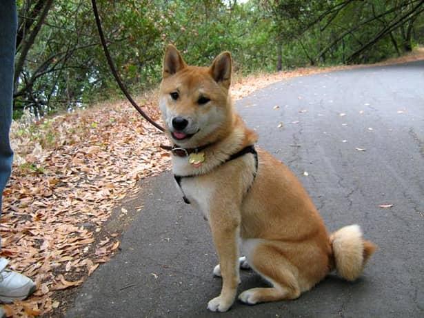 Proprietarii de câini și pisici riscă amenzi uriașe, imediar după recensământul animalelor