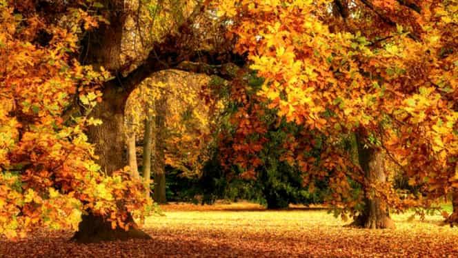 Prognoza meteo 19 octombrie. Vremea va fi călduroasă în toată ţara