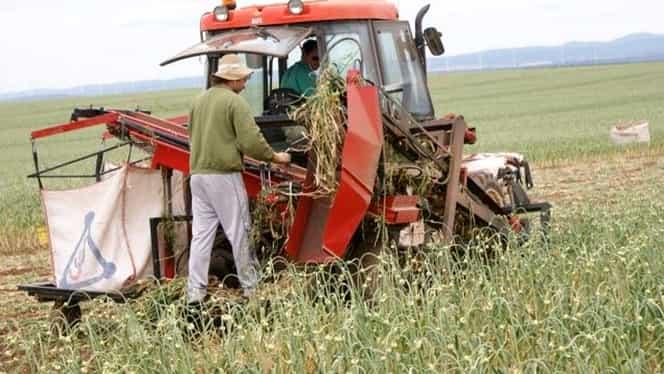 Ajutor pentru agricultori! Pentru ce culturi se dau 3000 de euro/hectar!