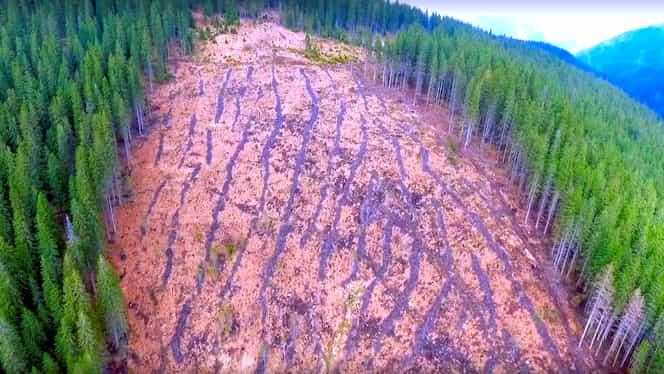 Comisia Europeană, avertisment pentru România în domeniul exploatărilor forestiere ilegale
