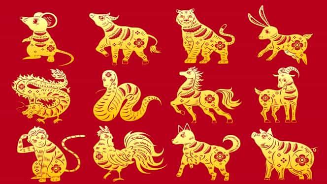 Horoscop chinezesc pentru luna octombrie 2019. Șobolanii și Dragonii au parte de probleme financiare