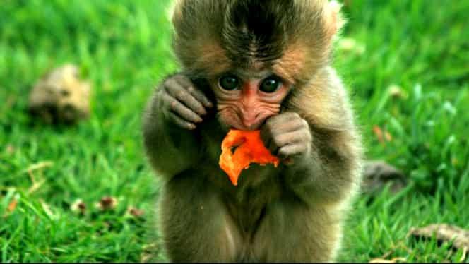Zodiac chinezesc pentru marți, 7 aprilie 2020. Maimuțele rămân blocate în idei fixe din cauza anturajului nepotrivit