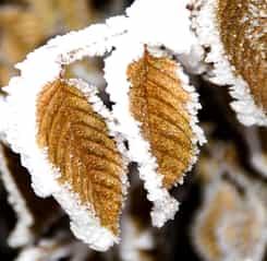 Alertă ANM, sâmbătă, 23 februarie: România este lovită de un val de aer polar