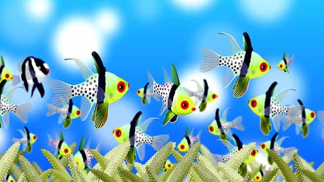 Horoscop zilnic: luni, 6 ianuarie 2020, Peștii vor avea parte de o întâlnire destul de neplăcută