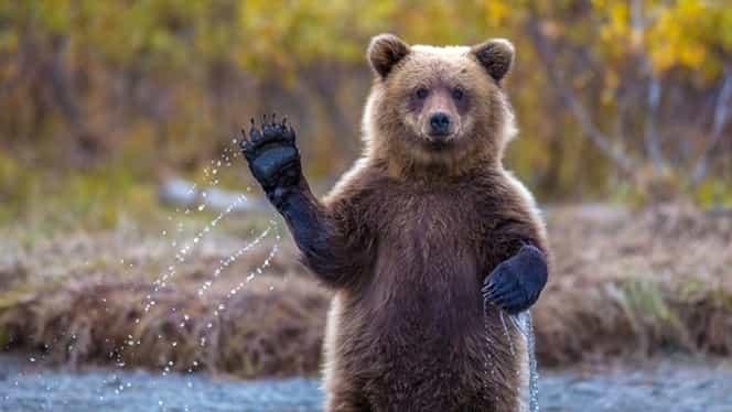 """Ministrul Agriculturii loveşte din nou: """"De ce să nu împuşcăm urşii?!"""""""