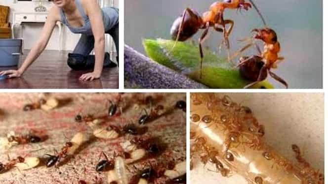 Idei practice la îndemână în casă pentru a scăpa de furnici