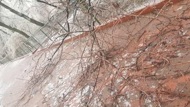 Un bărbat a fost strivit de un copac în București: A fost găsit inconștient, pe stradă