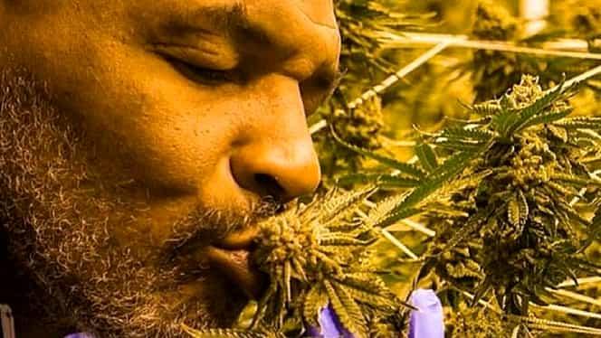 Mike Tyson s-a făcut agricultor. Are o plantație de marijuana și vrea să se extindă pe 160 de hectare. Galerie FOTO