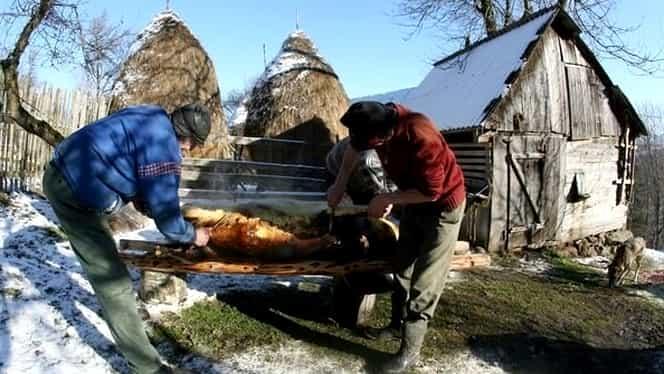 Ignatul porcilor. De ce sunt sacrificați porcii cu precădere pe 20 decembrie