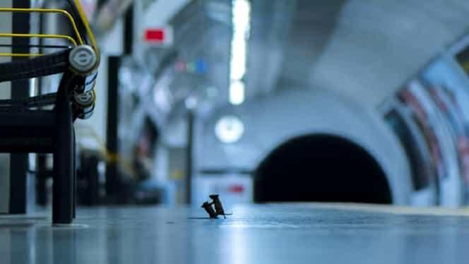 Doi șoareci la metroul din Londra au făcut înconjurul internetului. Ar putea fi poza anului 2019