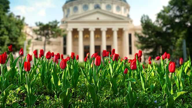 Mesaje de 8 martie de la politicieni: Iohannis, doar o poză simplă, Ciolacu și-a dat interesul și a făcut un video, iar Firea mulțumește Maicii Domnului
