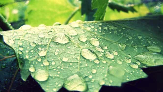 Prognoza meteo 25 mai. Va fi în continuare cald, dar va ploua!