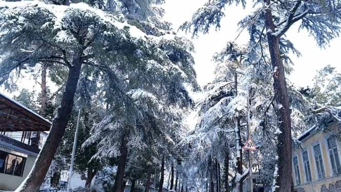 Ninge sau nu de Crăciun? Prognoză meteo de ultima oră de la ANM pentru Sărbători!