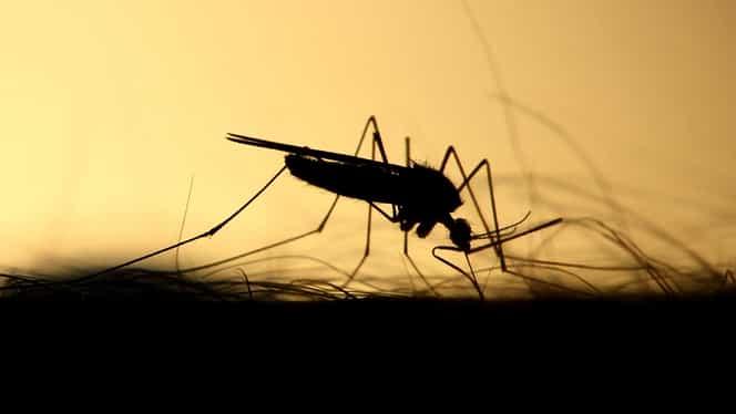 Soluția cu bicarbonat de sodiu care te apără de țânțari! Cum se prepară în casă
