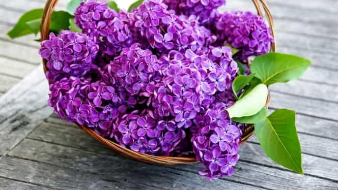 Florii 2020. Ce nume sunt sărbătorite pe 12 aprilie. Cui trebuie să îi spui, de fapt, La mulţi ani