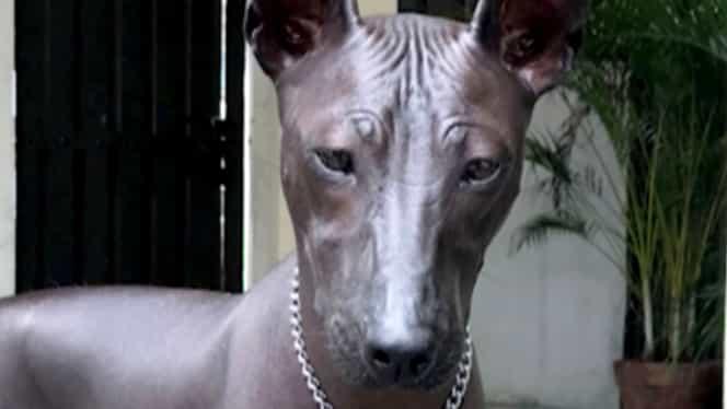 Este un câine sau o statuie? Imaginea care a împărțit internetul în două. A strâns 5.000 de comentarii într-o oră!