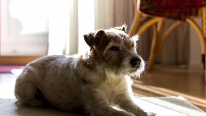 Un bărbat a murit după ce a fost lins de câine. S-a ales cu o infecţie care i-a fost fatală