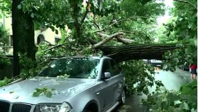 Furtuna din Bucureşti a ucis un om, a smuls din rădăcini 13 copaci şi a avariat şase maşini
