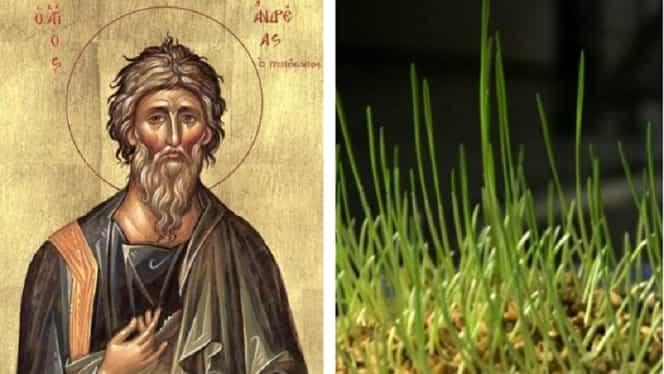 De ce se pune grâu la încolțit de Sfântul Andrei. Puțină lume știe acest lucru