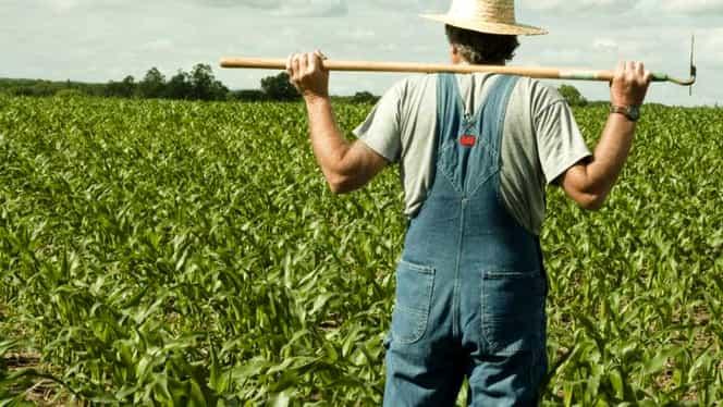 Bani de la stat pentru fermieri, de pe 16 octombrie. Aceștia vor primi un avans de 70% din subvenții