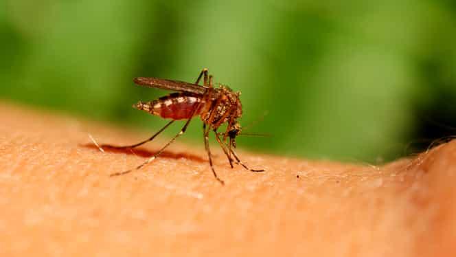 Virusul West Nile aduce din ce în ce mai multe decese! Ce spune Ministerul Sănătății despre asta