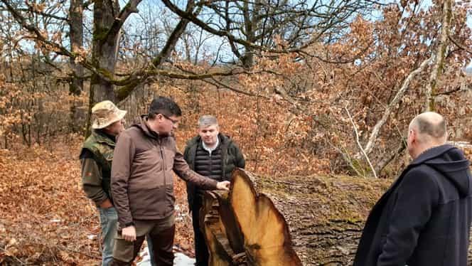 Ministerul Mediului propune mai multe modificări pentru oprirea tăierilor ilegale de arbori, printre care și monitorizarea prin GPS a fiecărui arbore