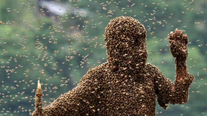 Doi bărbaţi au murit după ce au fost înţepaţi de albine în Buzău!