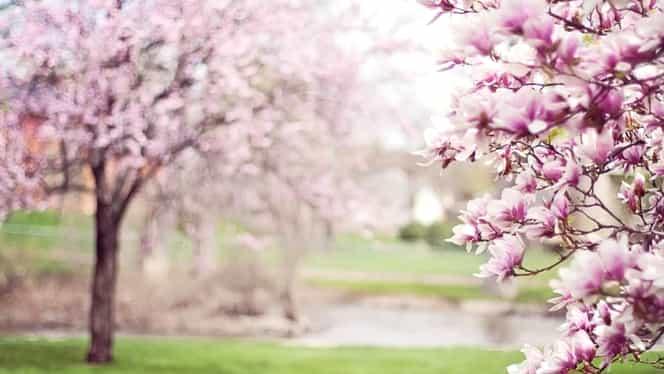 Tradiții și obiceiuri pentru echinocțiul de primăvară. Evenimentul are loc pe 20 martie
