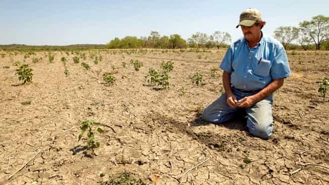 ONU, avertisment: rezervele de hrană ale planetei, în pericol! Specii de animale și plante, distruse de omenire