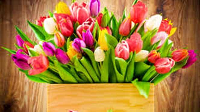 8 martie: cine a creat Ziua Femeii și ce evenimente au stat la bază