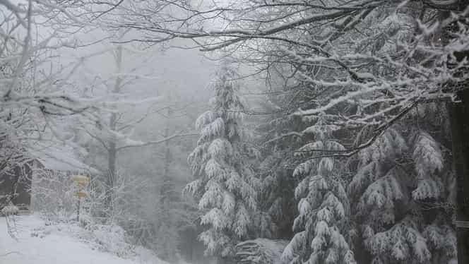Prognoza meteo: vineri, 27 decembrie 2019. Cum va fi vremea în București, Brașov, Constanța, Cluj-Napoca și Iași. Cer noros și ninsori la munte