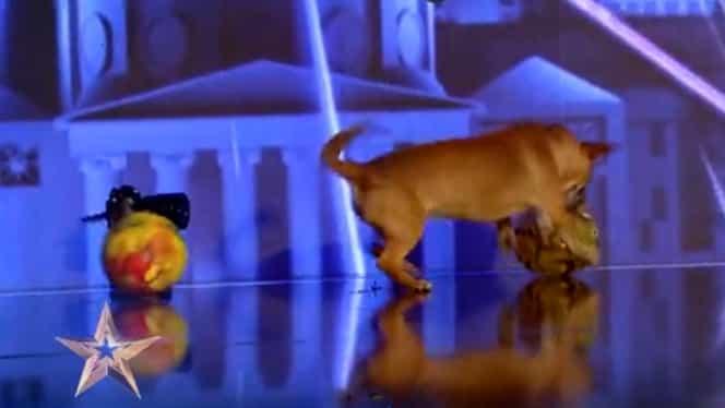 Un câine și-a făcut nevoile pe scena Românii au Talent, de la Pro TV. Ce reacție a avut Andra