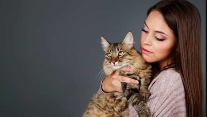 Proprietarii de câini și pisici riscă amenzi uriașe! Animalele trebuie declarate