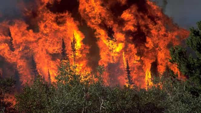 10 oameni au murit şi alţi 100 au fost răniţi în incendiul de vegetaţie din California! GALERIE FOTO