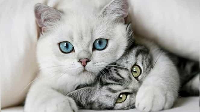Cât trăiește o pisică + 9 alte curiozități despre pisici