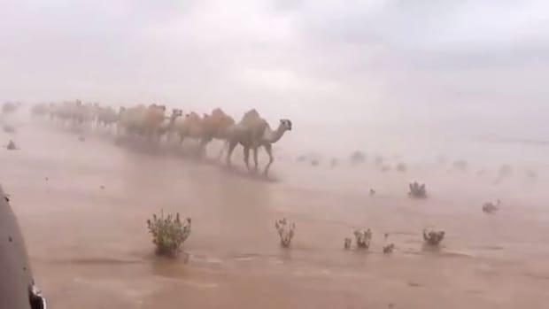 Mai multe regiuni din deşertul Golfului Persic au fost indundate din cauza ploilor. O cămilă e fotografiată mergând prin deşertul inundat