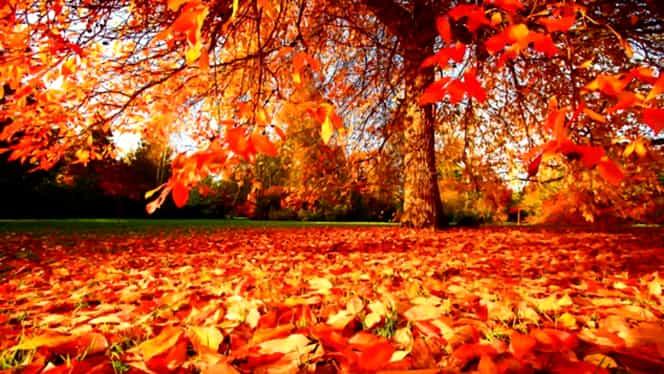 Prognoza meteo 4 noiembrie. Vremea se încălzeşte uşor, dar va ploua izolat