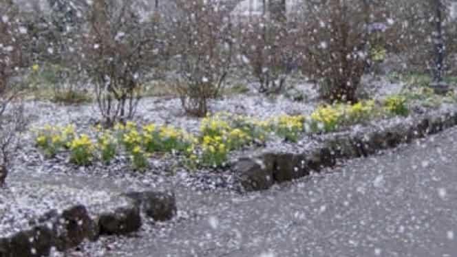 Prognoza meteo 11 ianuarie. Vin ploile şi ninsorile!