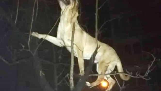 Gest nemilos la Timișoara. Un bărbat și-a aruncat câinele de la etajul 4. Polițiștii au rămas muți când au aflat explicația