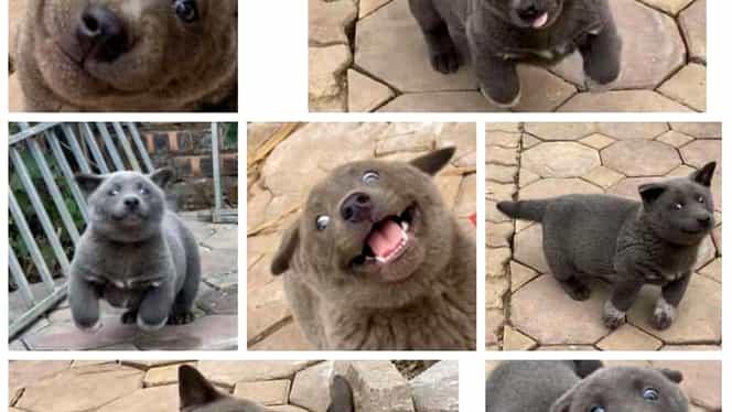Câine sau pisică? Un animal rar a câștigat inimile internauților