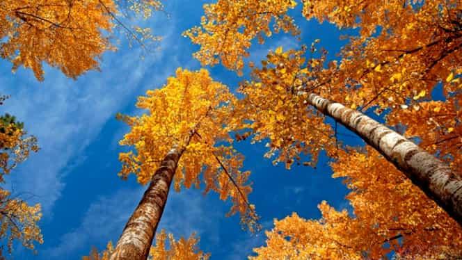 Prognoza meteo 3 octombrie. Vremea se încălzeşte în toată ţara
