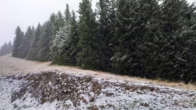 Ninge în Bucovina. Zăpada a început să se instaleze în masivul Rarău. FOTO și VIDEO