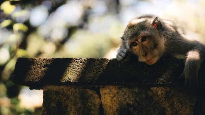 Zodiac Chinezesc pentru miercuri, 22 aprilie. Maimuțele își asumă rolul de judecător într-o chestiune importantă