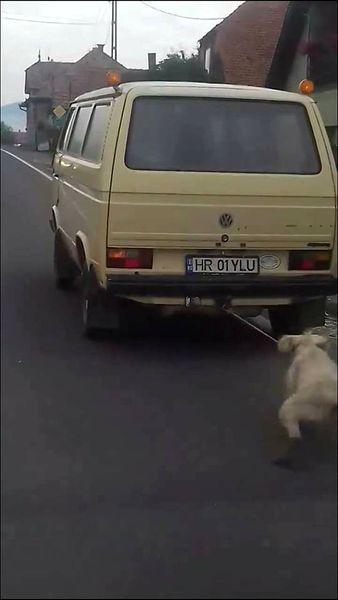 O masina taraste un caine