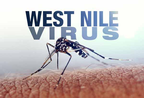 Virusul West Nile aduce din ce în ce mai multe decese! Oricine poate fi infectat cu el