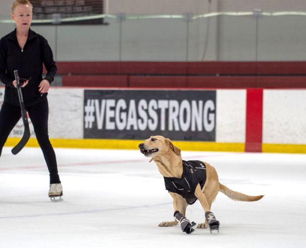 Primul câine care patinează a uimit toți oamenii din jur prin fericirea cu care face sportul pe gheata
