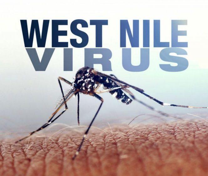 virusul west nile in romania (1)